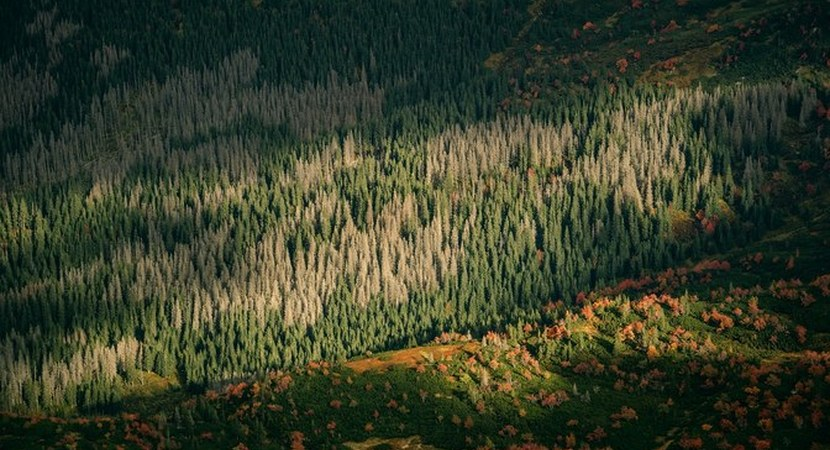 There will be no desert. Forests and climate change