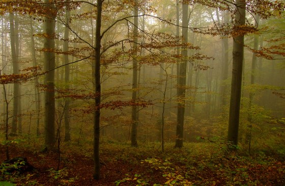 A picture of a foggy forest