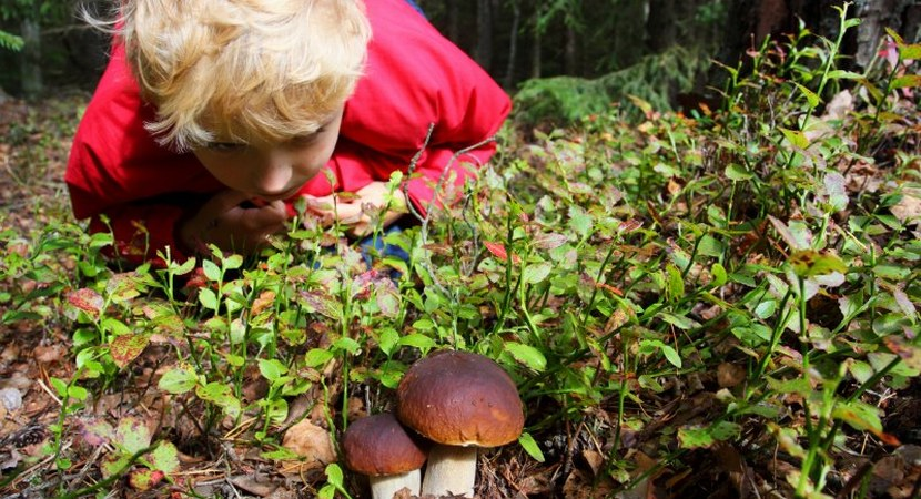 Education in The State Forests