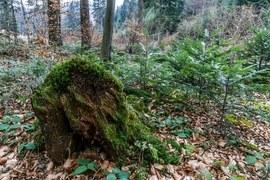 Beskid Sądecki Forest (lasy)