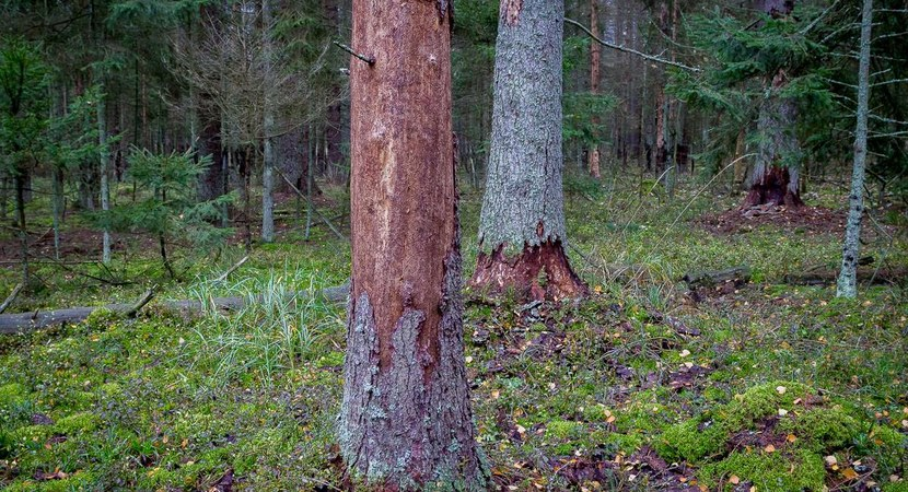 Opinion of the Scientific Council for Forestry
