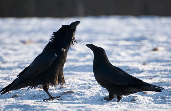 Birds have already been celebrating the valentine's day