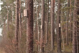 Shelters for bats