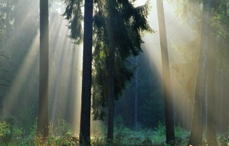 Polish forests