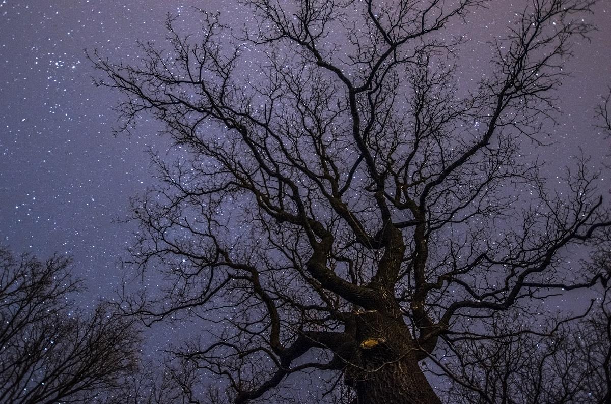 Dębowe nocne.jpg