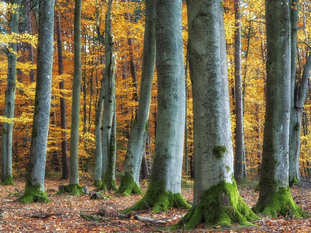 Najmodniejsze kolory jesieni.jpg