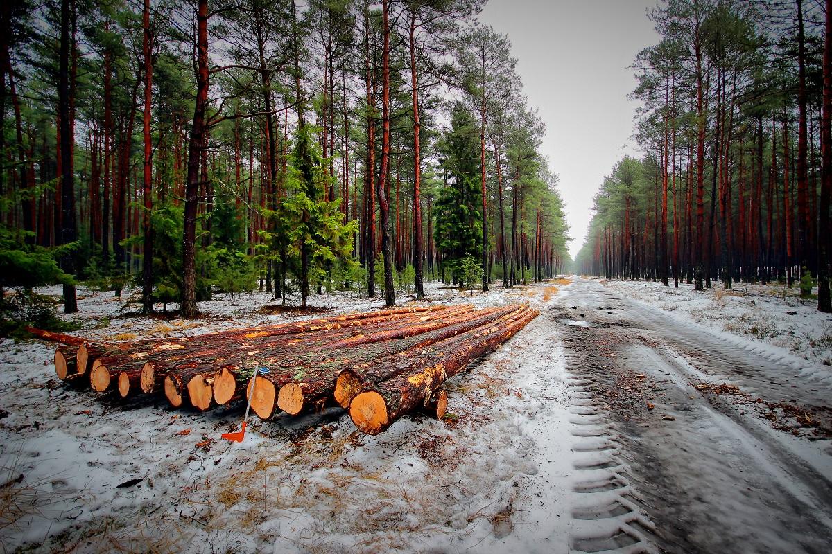 Odbiórka drewna w HDR.jpg
