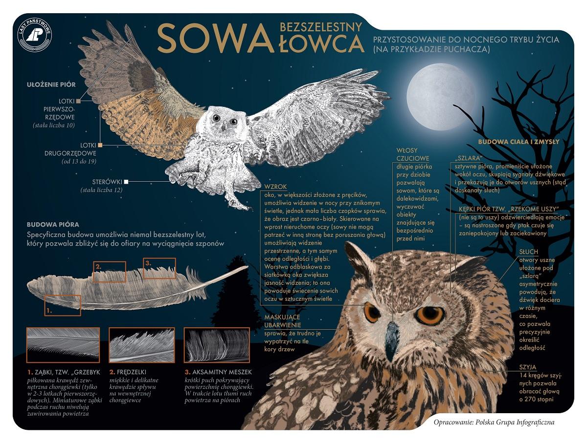 sowa_net.jpg