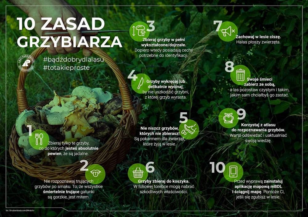infografika grzyby.jpg