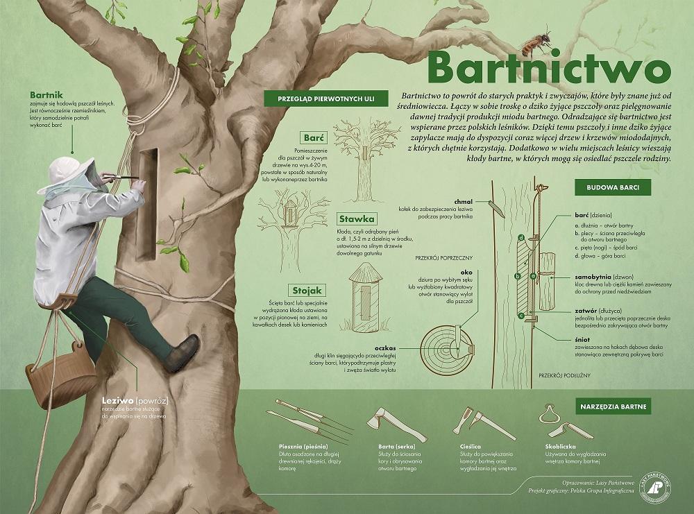 Bartnictwo - Infografika.jpg
