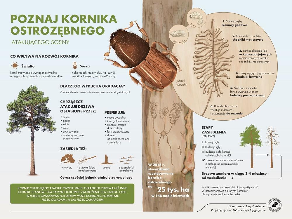 Kornik_ostrozębny_tablica_www.jpg