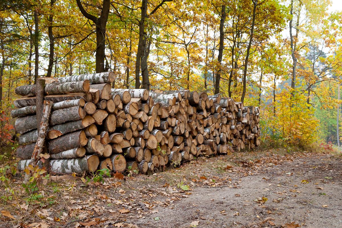 Stos drewna w lesiefot. Slawomir Kowalczyk.jpg