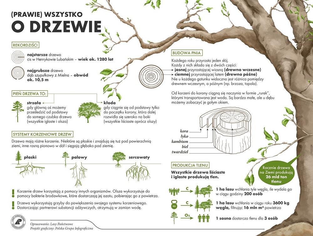 drzewa_dzien-01(1)1000.jpg