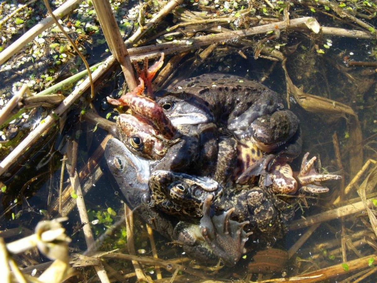 żaby03.jpg