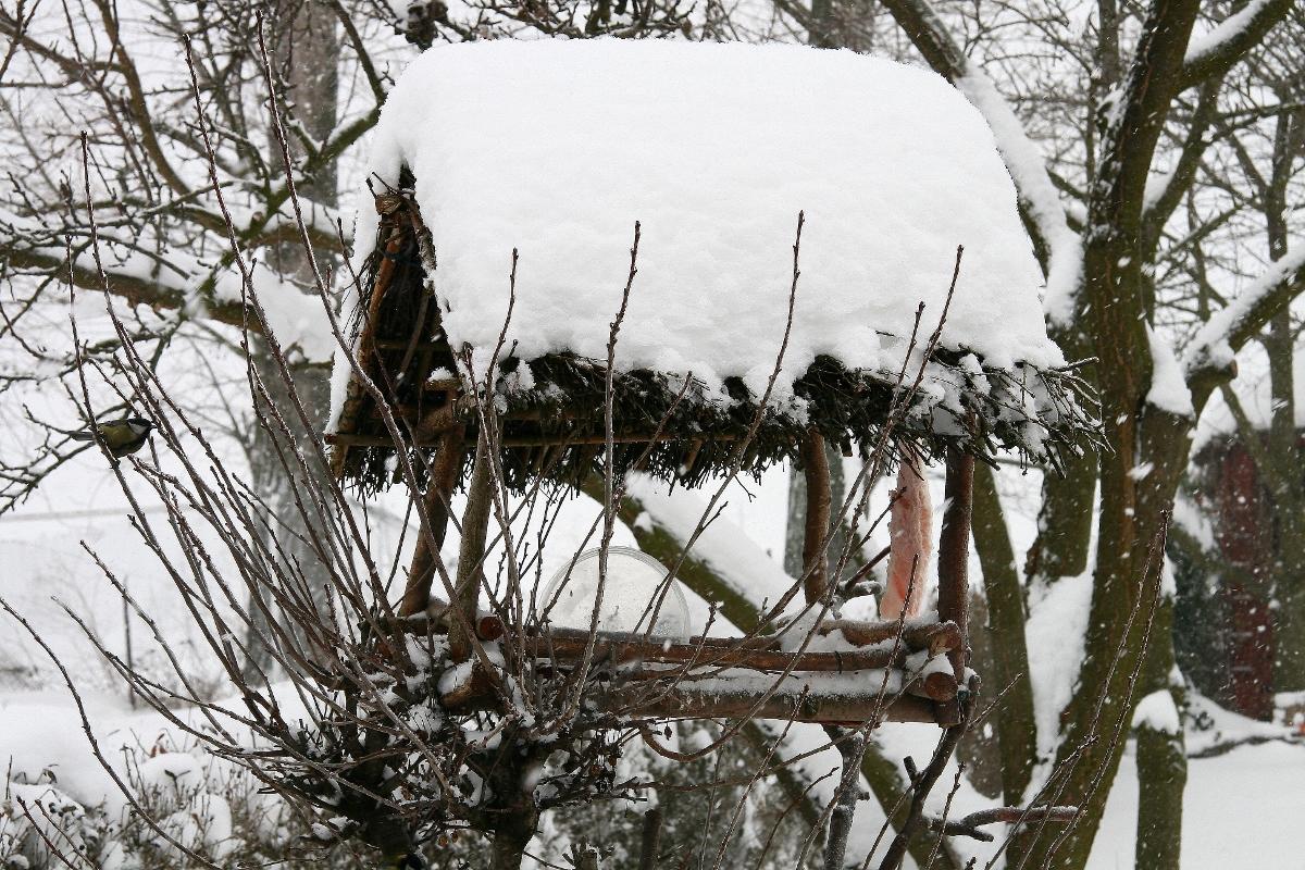 Zimową stołówkę często odwiedzają sikorki
