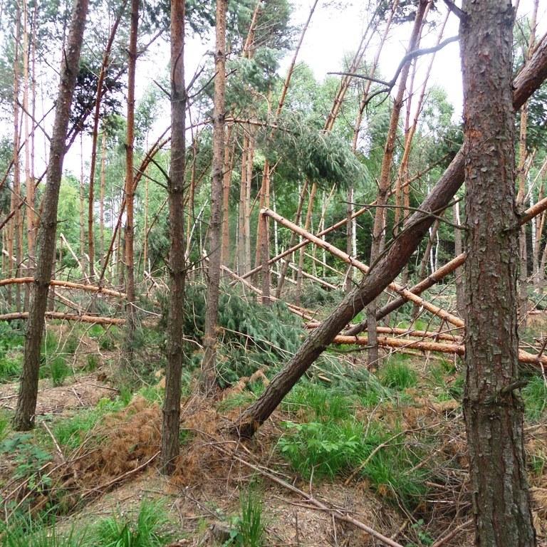 Największe szkody odnotowano w Nadleśnictwie Chmielnik