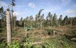 RDLP Gdańsk: Straciliśmy ponad 30 milionów drzew