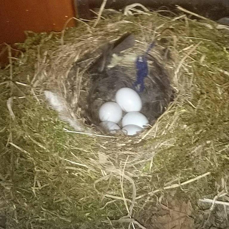 pięć białych jajeczek.jpg