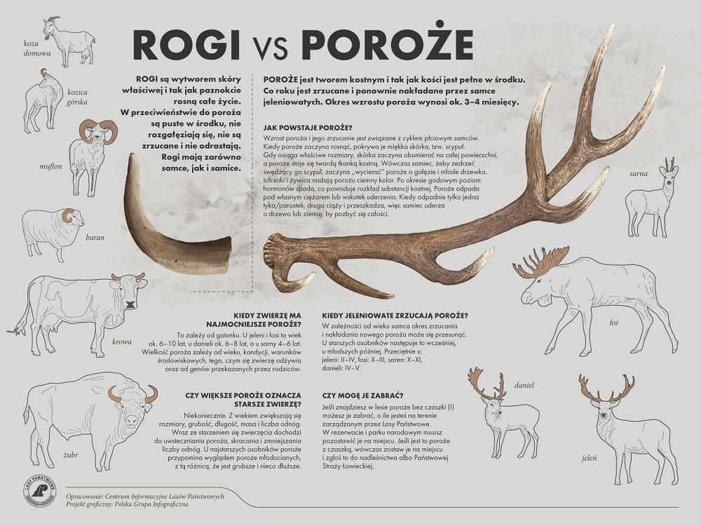 rogi-vs-poroze.jpg