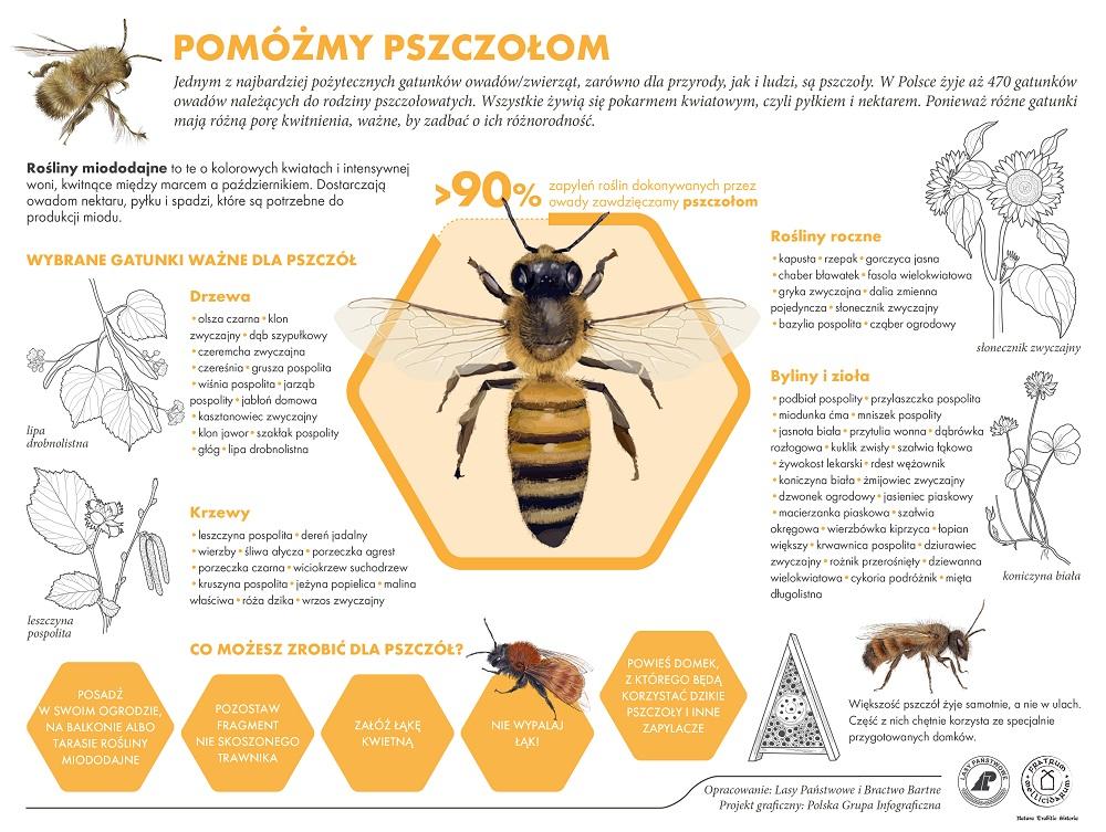 Pomóżmy pszczołom jpg.jpg