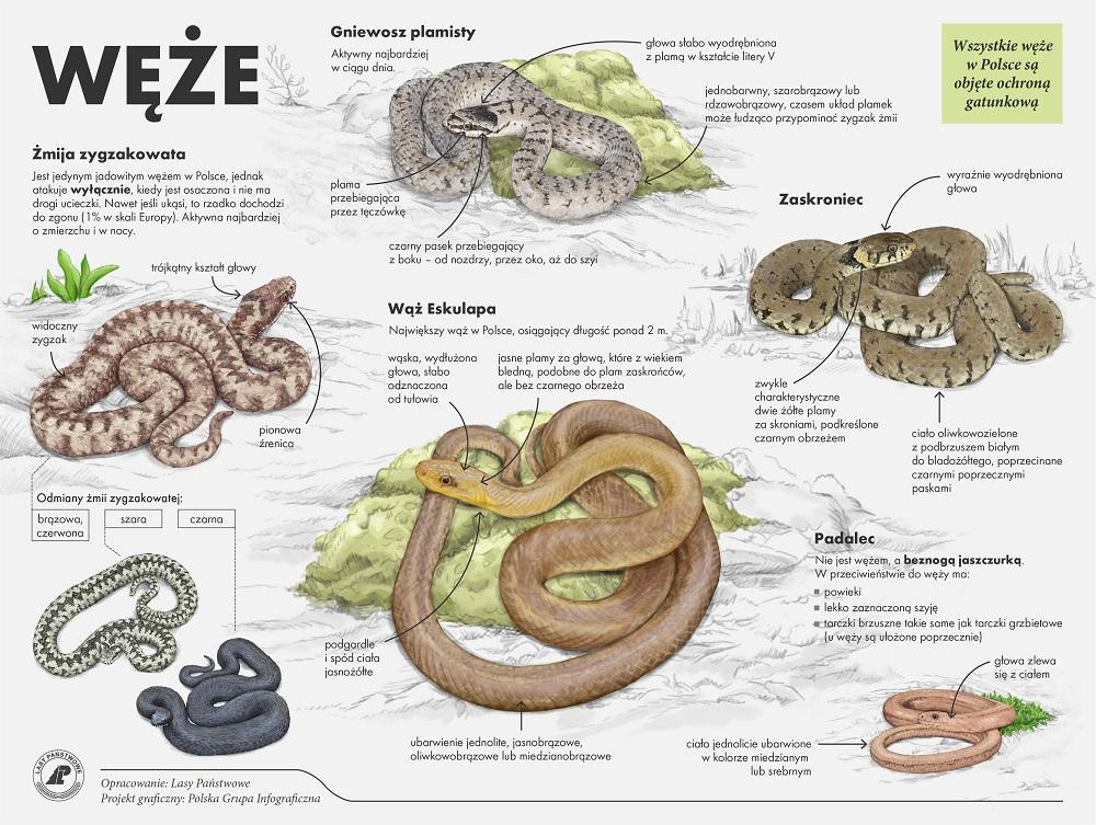 Węże.jpg