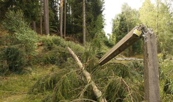 W czterech nadleśnictwach leśnicy odblokowali drogi