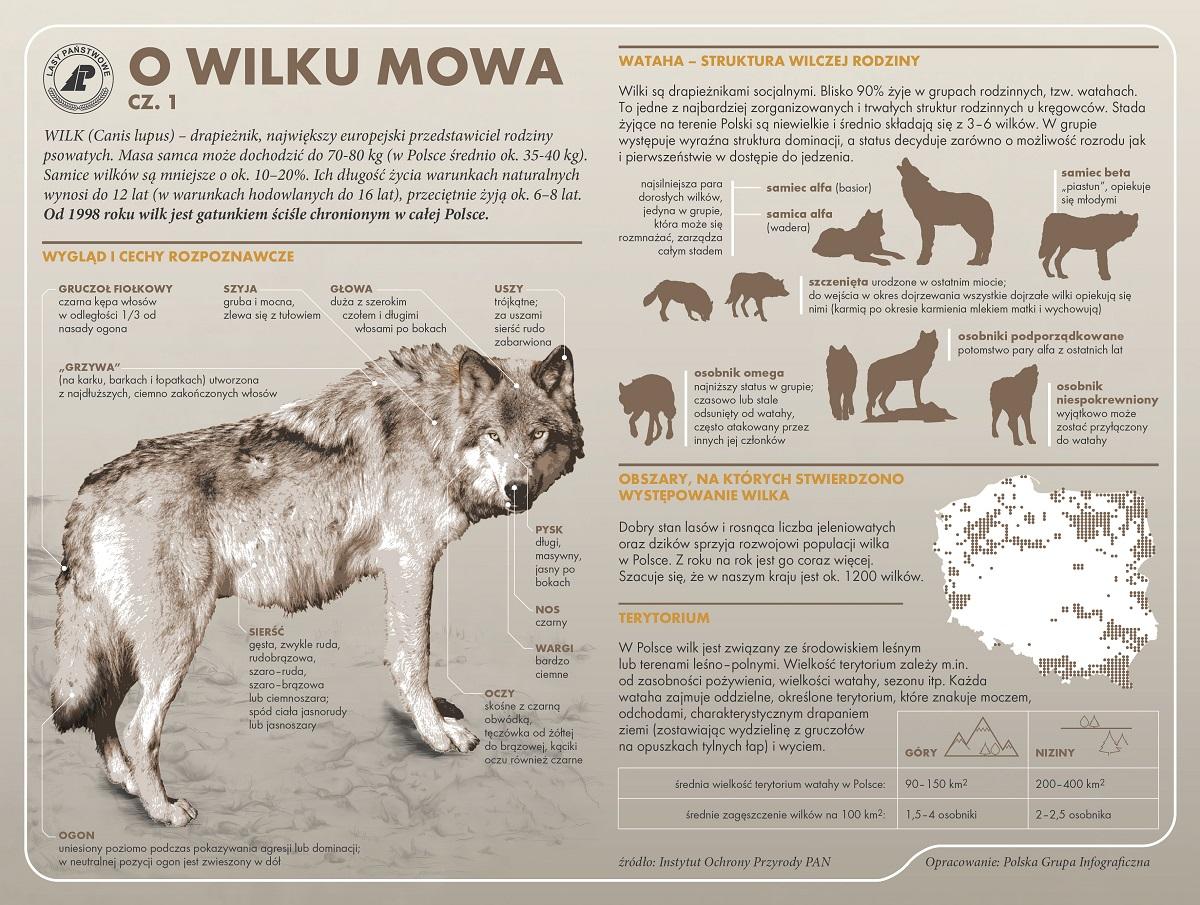 GOTOWA  O WILKU MOWA cz. 1.jpg