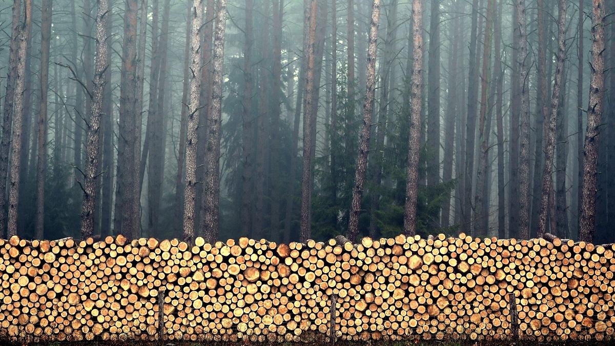 1 Las chaotyczny i las poukładany 1200.jpg