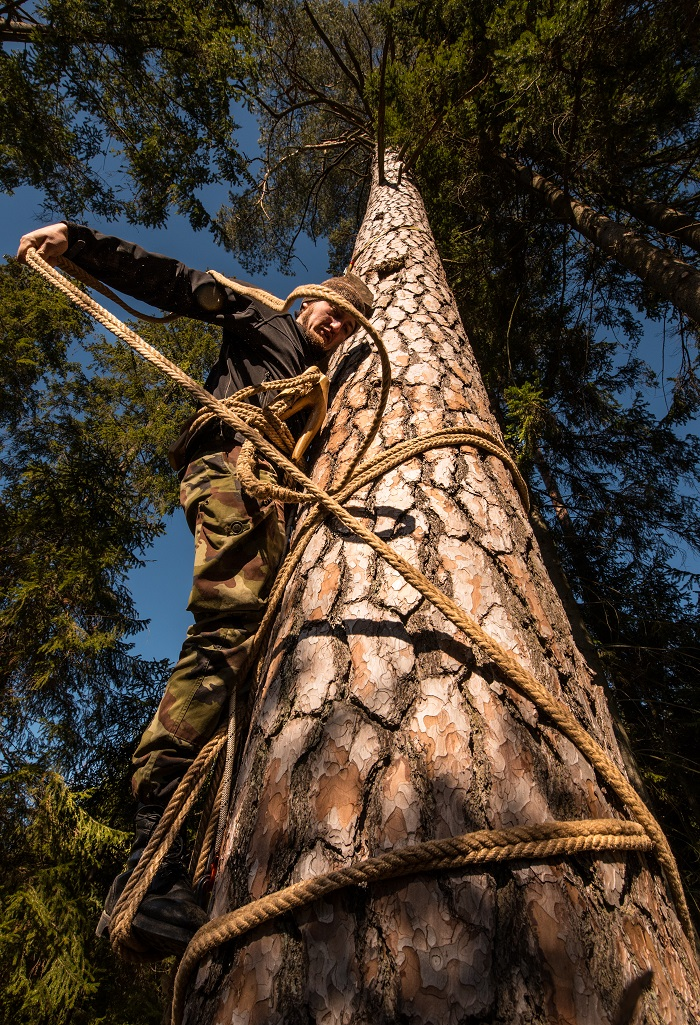 Leziwem na drzewo 1 700.jpg