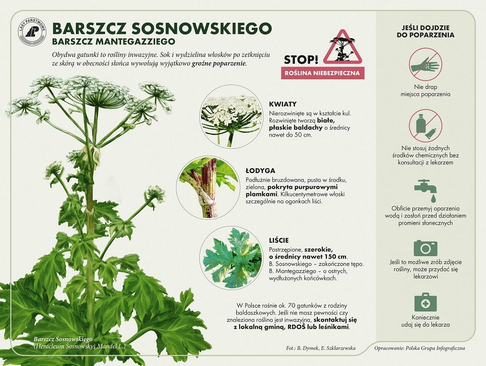 barszcz-sosnowskiego.jpg
