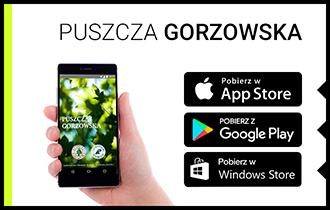 puszcza_gorzowska.jpg