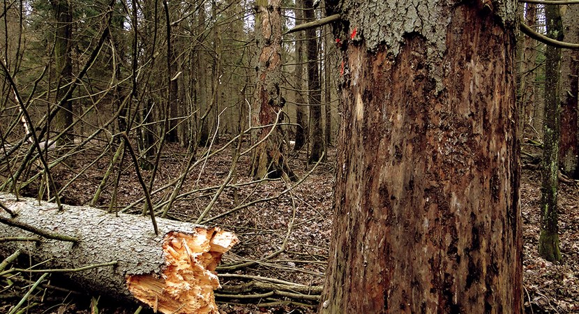 10 facts about the Białowieża Primeval Forest…