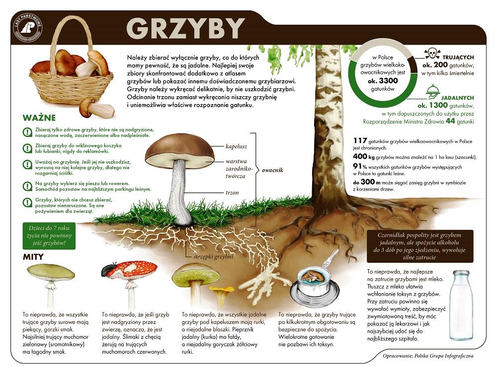 Infografilka LP GRZYBY - 1000.jpg