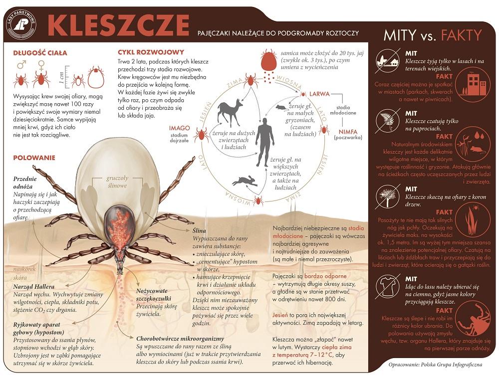 KLESZCZ_cz-1 1000.jpg