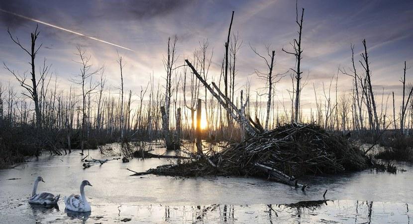 """Konkurs fotograficzny """"Lasy w obiektywach leśników"""""""