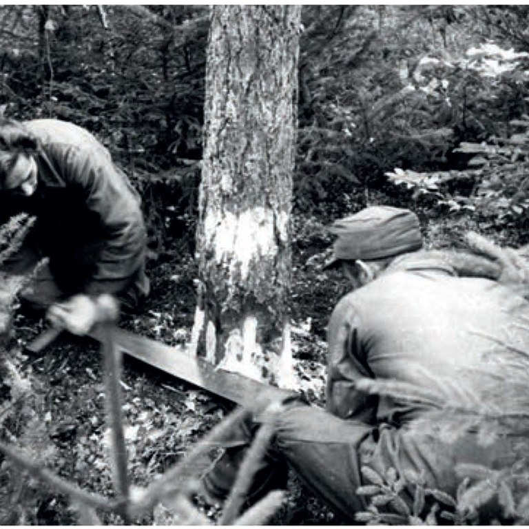 Rok 1949. Ręczna wycinka drzew (PAP/ Wiktor Janik)