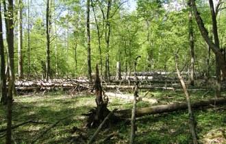 Eksperci IUCN w Puszczy Białowieskiej