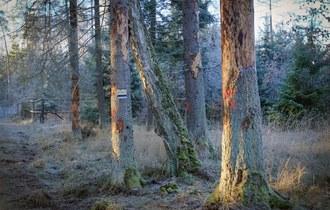Leśnicy zadbają o bezpieczeństwo w Puszczy Białowieskiej