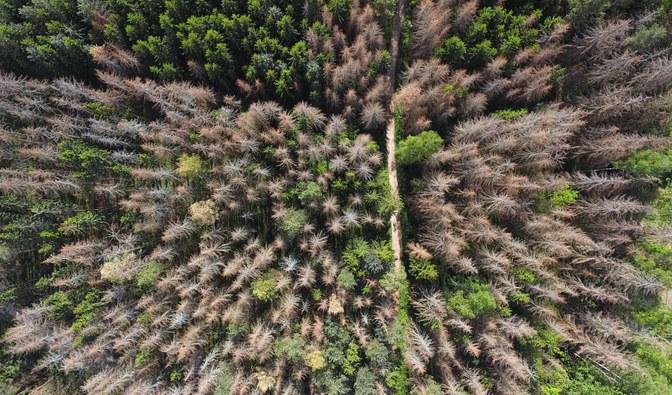 Martwy drzewostan świerkowy w pobliżu Miejsca Mocy. Fot: Marek Matecki