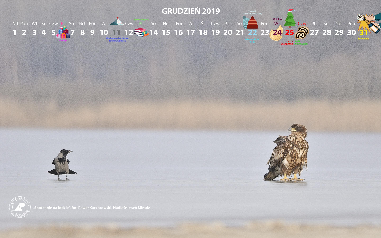 Kalendarz 12 2019 2880x1800.jpg