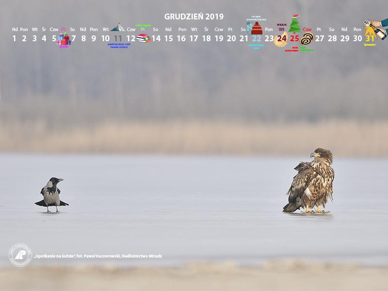 Kalendarz 12 2019 800x600.jpg