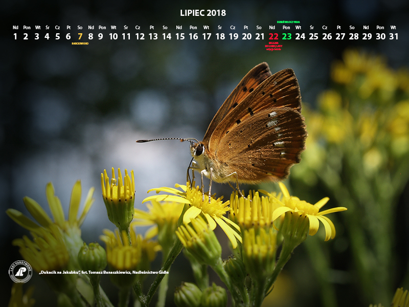 Kalendarz_lipiec_2018_800x600[1].jpg