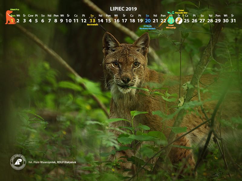 Kalendarz_lipiec2019_800x600[1].jpg
