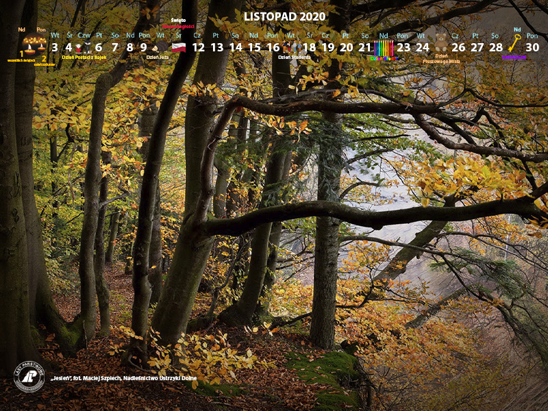 Kalendarz_listopad_2020_800x600[1].jpg