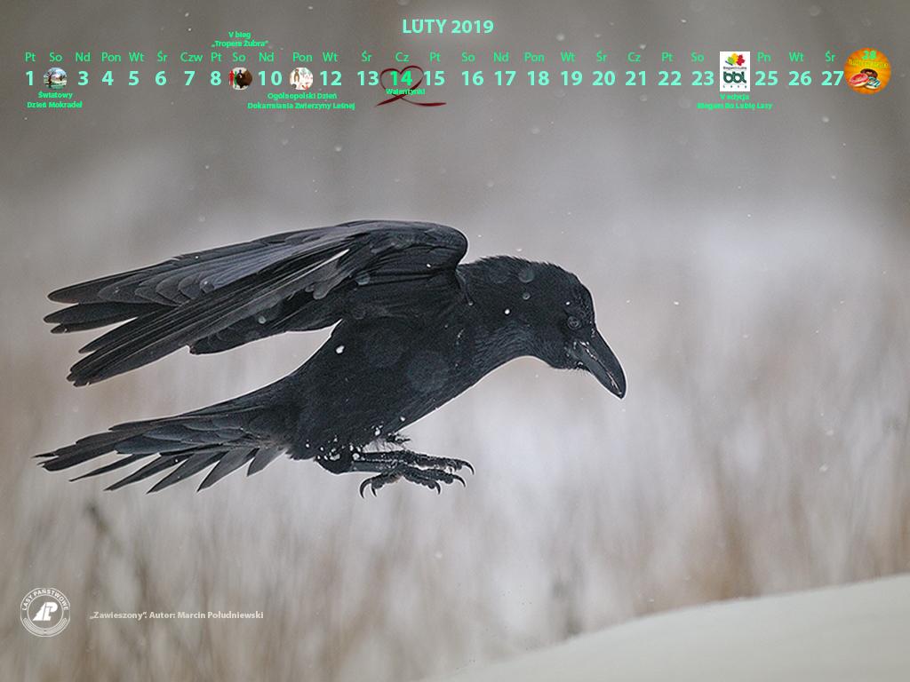 Kalendarz_luty_2019_1024x768_2[1].jpg
