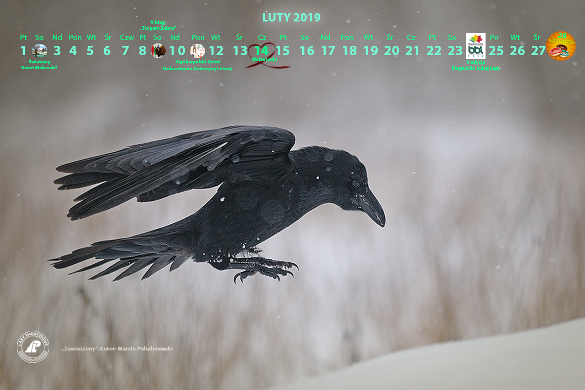 Kalendarz_luty_2019_1280X800_2[2].jpg