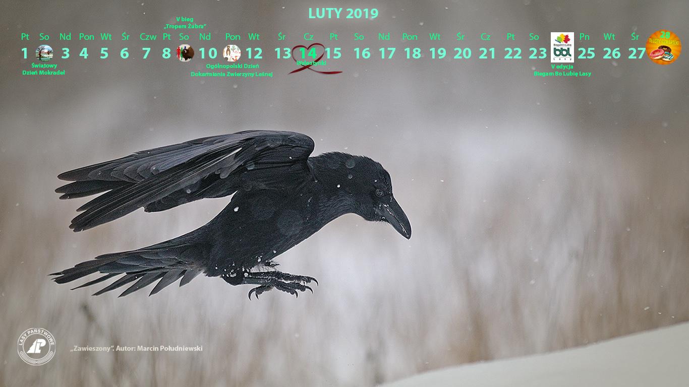 Kalendarz_luty_2019_1366X768_2[1].jpg