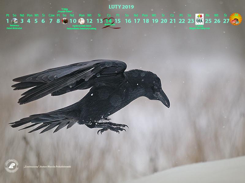 Kalendarz_luty_2019_800x600_2[1].jpg