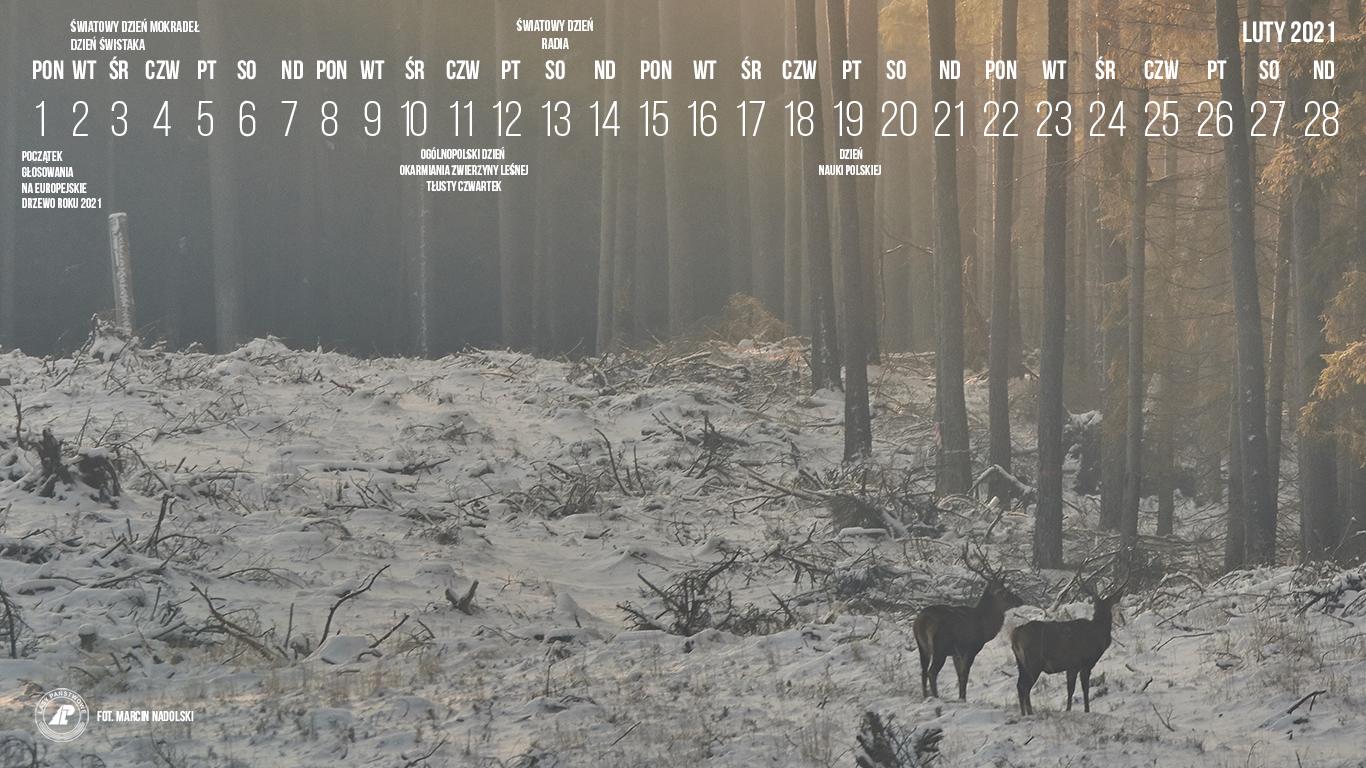 02-2021_1366X768[1].jpg