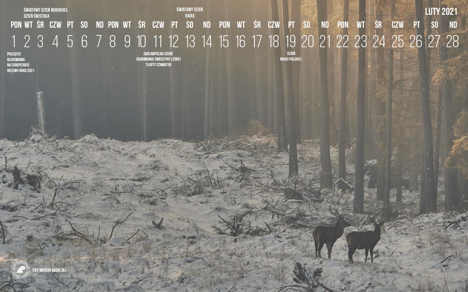 02-2021_1920X1200[1].jpg